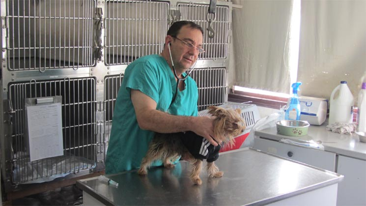 veterinarian support for pets before flight
