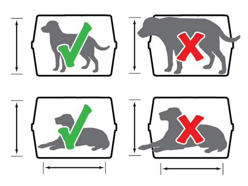 kennel sizing